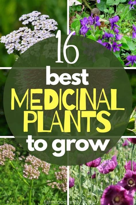 16+ Best Medicinal Plants And Their Uses (With Names and