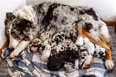 This Adorable Doggy Mom Fostered Baby Bunnies   Reader's